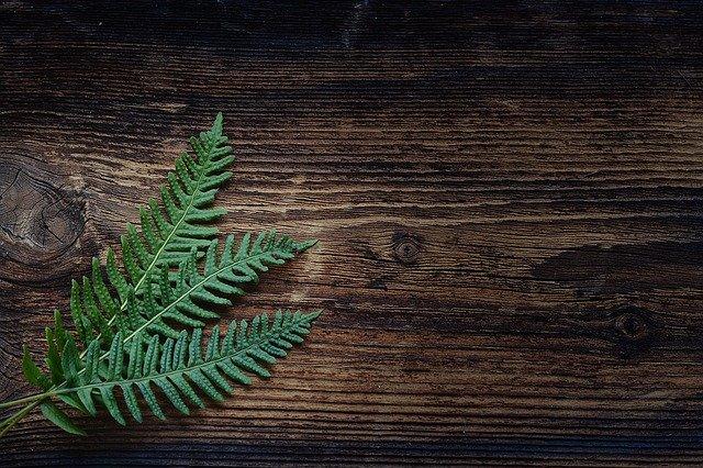 tanie rośliny